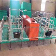 BM欧式母猪产床-双体产床尺寸及优势