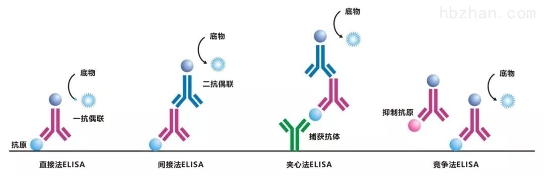 <strong><strong><strong><strong>大鼠内皮素1(ET-1)ELISA试剂盒</strong></strong></strong></strong>
