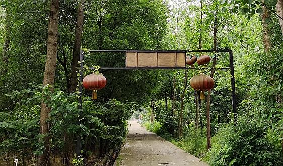 中共中央办公厅 国务院办公厅印发《关于全面推行林长制的意见》