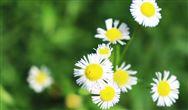 环保在线2021年春节放假通知