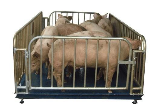 2T牲畜专用地磅秤