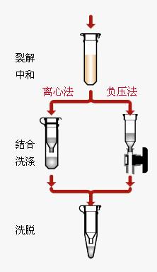 Axygen质粒小量制备试剂盒AP-MN-P-250