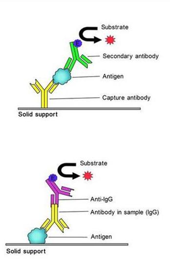 小鼠低密度脂蛋白免疫复合物检测试剂盒